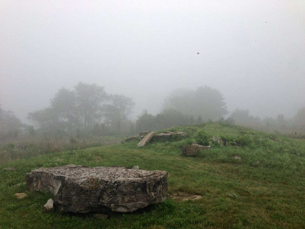 Foggy morning in the park. Aug. 1, 2014
