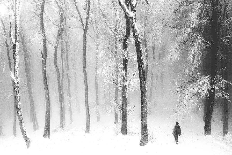 Admiring the Silence_by Serban Bogdan
