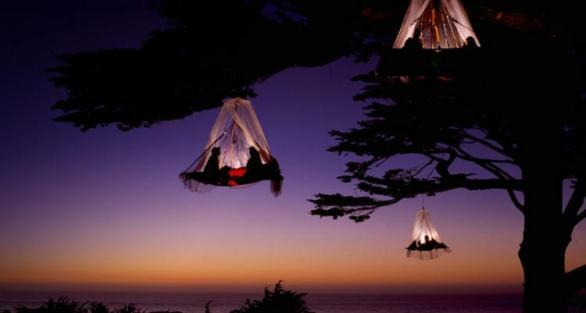 treecamping