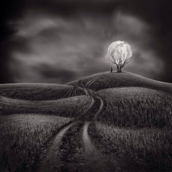 MoonTreeFruit_Sherry Akrami