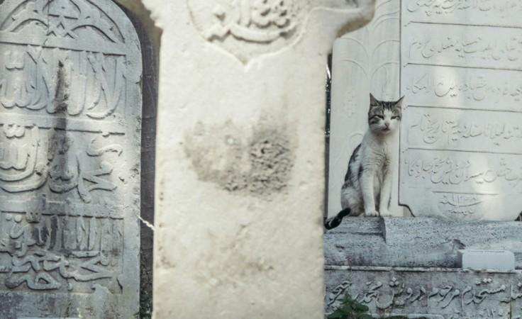 Istanbul-17-edit-940x576